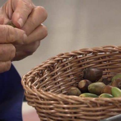 191115-acorn-bites-indigenous-foodways-nutrition-stewardship-8-acorn-processing-2-700x394