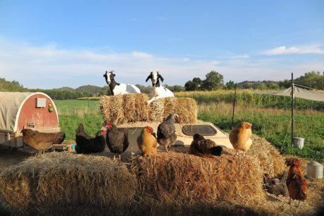 Sonoma County Farm Trails