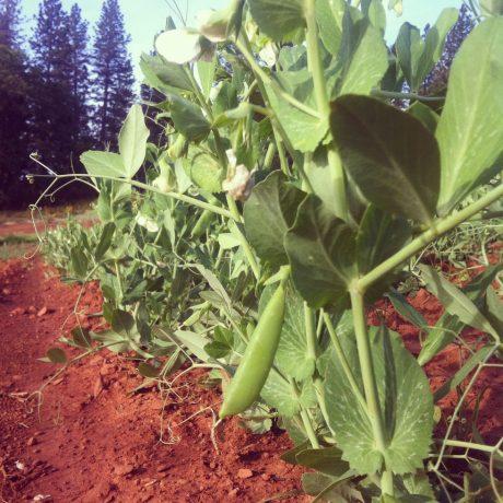 Small Farm FSMA Series – Part 1 of 4