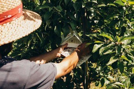 CAFF Job: Ecological Pest Management Field Technician – San Joaquin Valley