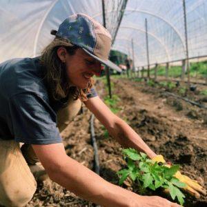Oz photo_ planting tomatoes
