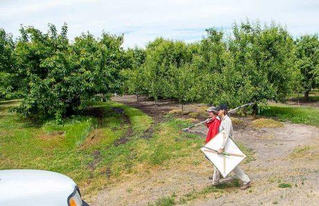 CAFF Job: Ecological Pest Management Field Technician – Sacramento Valley