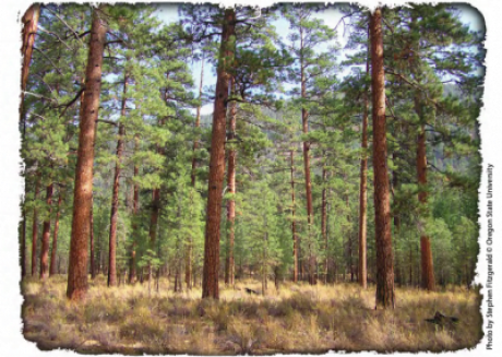 A Land Manager's Guide for Creating Fire-Resistant Forests
