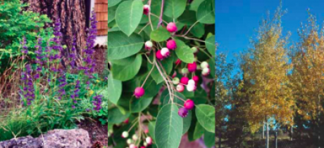 Fire-Resistant Plants for Landscapes