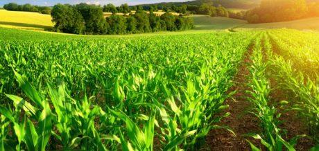 Crop Insurance, USDA