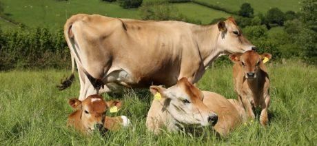 Disaster Planning for Livestock