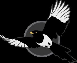 magpie-in-flight-left