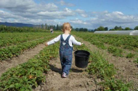 COVID-19 FAQ for U-Pick Farms